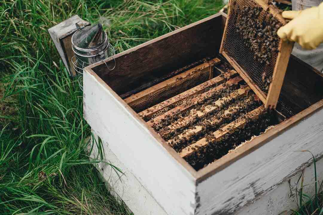 Come ammorbidire il miele fatto in casa?
